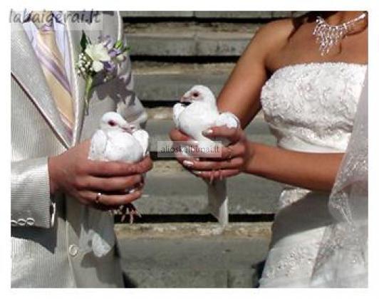 Balti balandžiai-meilės ir ištikimybės simbolis-alioskelbimai