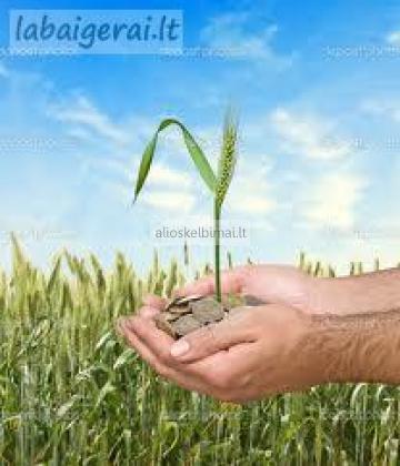 DARBAI ŽEMĖS ŪKYJE BE ANGLŲ KALBOS-alioskelbimai