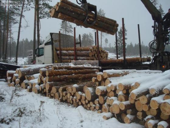 Perkame Apvaliąją Medieną (medžio Rąstus)-alioskelbimai