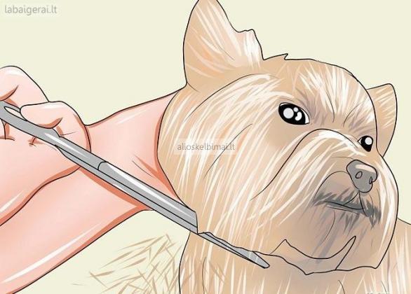 Šunų kirpimo kursai pradedantiesiems-alioskelbimai