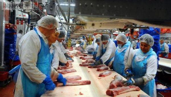 Darbas mėsos fabrike Vokietijoje