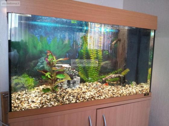 Akvariumas 125L-alioskelbimai