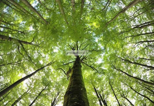Greitai ir brangiai nupirksime jūsų žemės sklypą su mišku-alioskelbimai