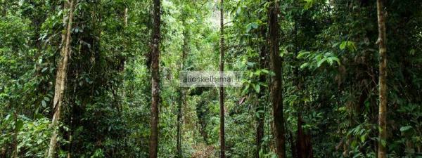 Greitai ir brangiai nupirksime jūsų žemės sklypą su mišku