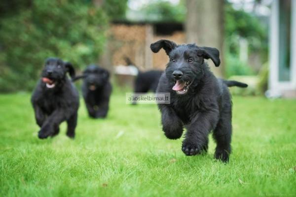 Šunų kirpykla Panevėžyje-alioskelbimai