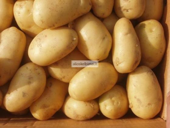Parduodu Antro atsėlio valgomąsias Bulves-alioskelbimai